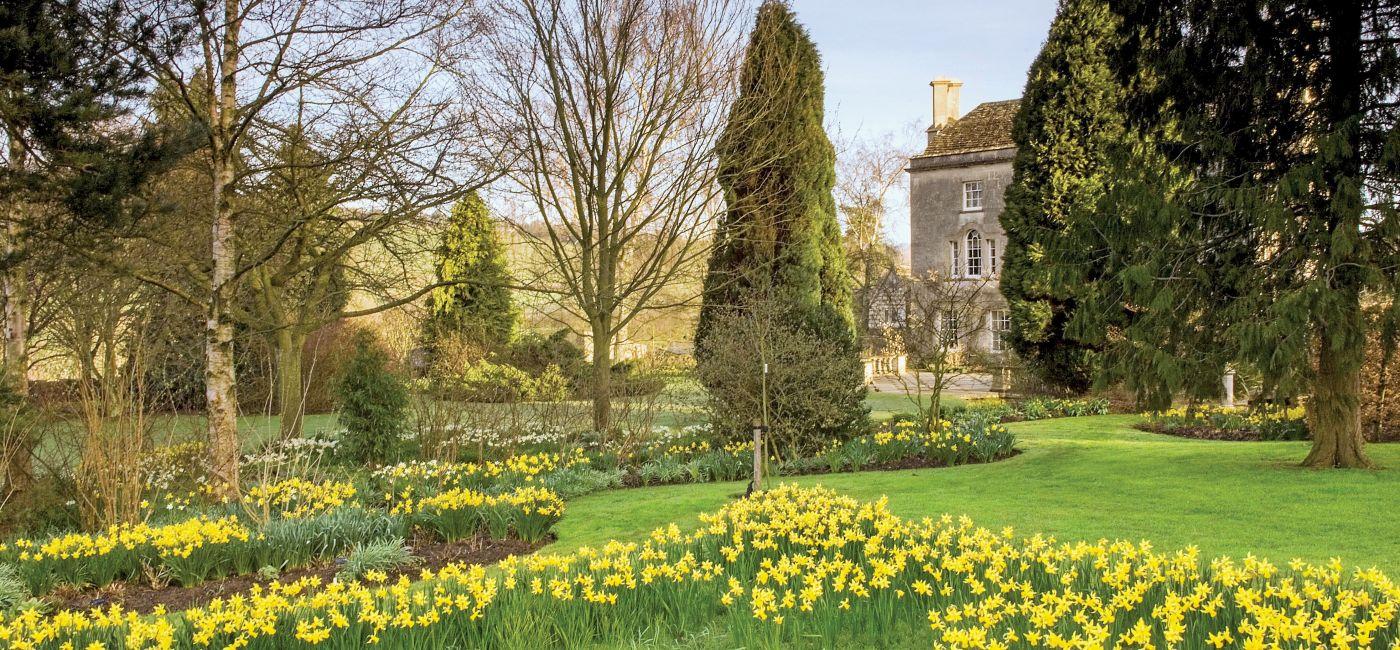 Pełen narcyzów ogród w Painswick