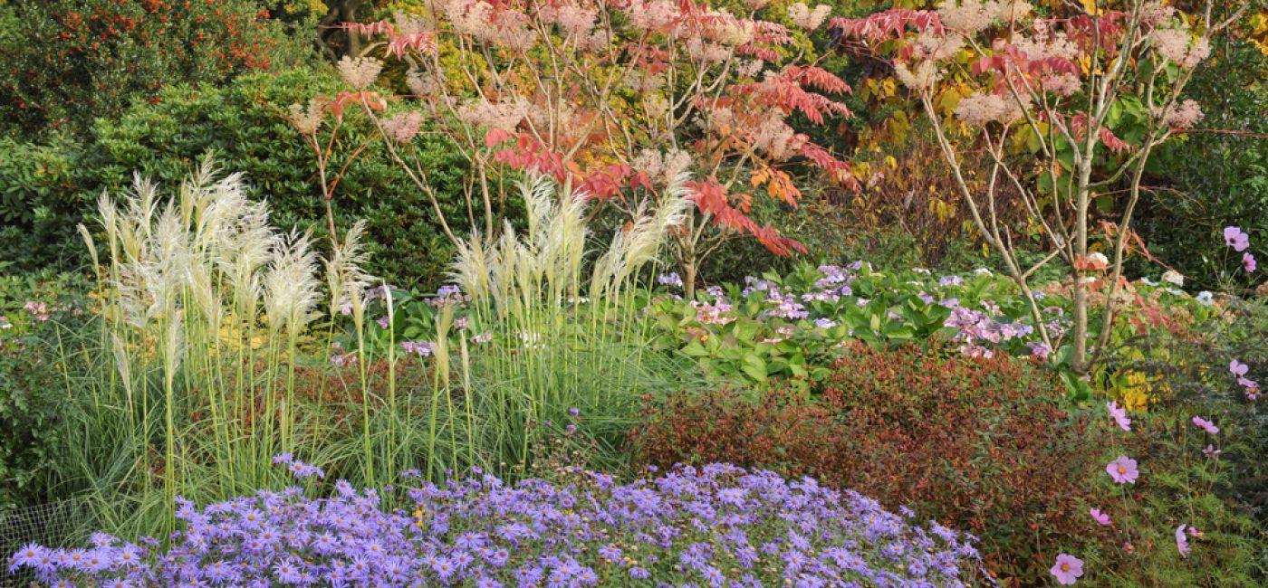 Trawy dekoracyjne tworzą naturalny efekt w ogrodzie