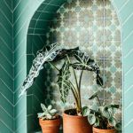 rośliny w łazience