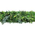 Zielony obraz z roślin