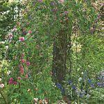 aranżacja ogrodu róże