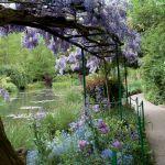 Bujna wisteria potrzebuje solidnej podpory