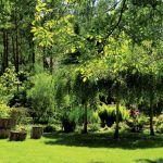 Dom zupełnie znika wśród bujnej zieleni.