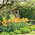 Dywany tulipanów. Tulipany wśród bukszpanów