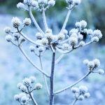 zimowy ogród rośliny