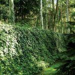 Jak w tajemniczym ogrodzie... Ogród na leśnej polanie