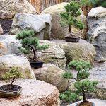 Japoński ogród niedaleko Kudowy-Zdrój. Najpiękniejsze drzewka bonsai w Polsce.