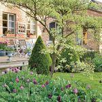 Kompozycje tulipany wśród bukszpanów. Ogród pełen nastrojowych zakątków.
