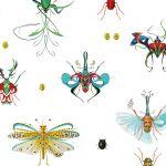 Księga owadów, 2011 r. Botaniczne grafiki Bożki Rydlewskiej