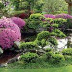 azalia japońska aranżacja ogrodu