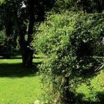 Ogród na leśnej polanie. Ogród na leśnej polanie