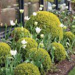 Ogród pośród pól pełnych tulipanów. Trochę tradycyjny i trochę nowoczesny, wyraźnie angielski i ciut holenderski.
