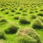 Ozdobne trawy do ogrodu