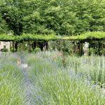 lawenda i róże aranżacje ogrodów
