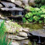 Rododendrony kochają wilgoć, doskonale czują się więc w pobliżu oczek wodnych.