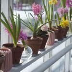 kwiatki w doniczkach