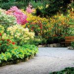Różaneczniki zachwycają swoimi kolorami.