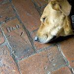 Spichlerz został zbudowany z nowych kamieni, tylko na podłogę trafiły stare cegły.