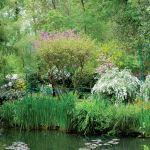 Tło dla stawu tworzy gąszcz kolorowo kwitnących krzewów.