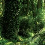 Uprawa ogrodu w lesie nie jest łatwe, ale takie zakątki w pełni ten trud wynagradzają.