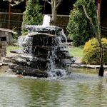 W tym królestwie ptaków wszystko zaprojektowane jest dla ich wygody - nawet fontanna.