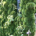 ogród mchy rumianki  paprocie