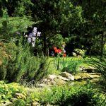 Wokół stawu kwitnie mnóstwo kwiatów: irysy, liliowce, azalie i niezapominajki.