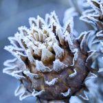 zimowy ogród dziki