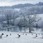 zimowy ogród krajobraz