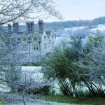 zimowy ogród natura