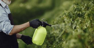 szkodniki roślin w ogrodzie