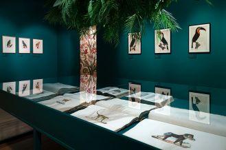 rośliny i zwierzęta atlasy historii naturalnej w epoce Linneusza