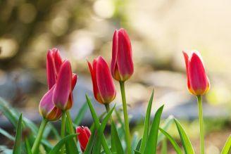 Cebulki kwiatowe to idealny sposób na piękne kwiaty w ogrodzie