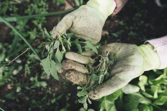 Ekologia w ogrodzie – ekologiczne zwalczanie chwastów
