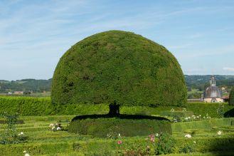 ogród iglaki
