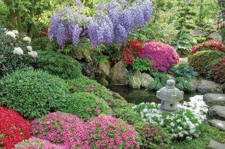 wisteria i azalia w ogrodzie japońskim