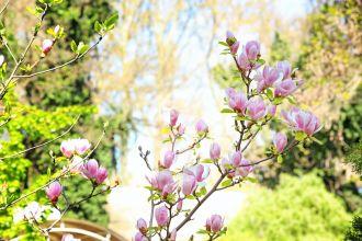 krzewy kwitnące wiosną