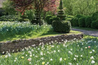 Największe wrażenie w ogrodzie robią narcyzy i inne wiosenne kwiaty.