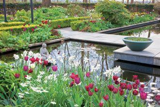 ogród pełen tulipanów