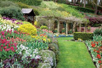 Tulipany w Little Larford rosną na grządkach i na pagórkach. Granice wyznaczają niewielkie żywopłoty.