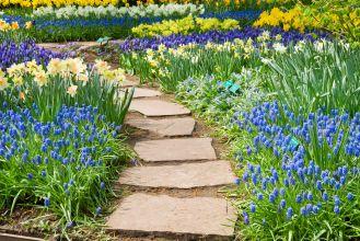 Pierwsze wiosenne kwiaty w ogrodzie