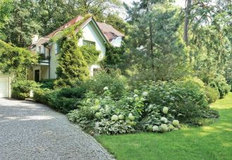 Pomysł na ogród w lesie, gdzie kwitną hortensje, wisterie i rododendrony