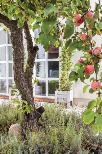 Palazzo z jabłonką – klasyczne wnętrza domu w Szczecinie