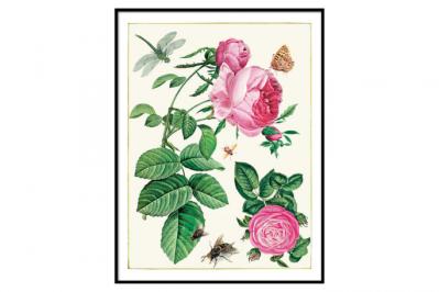 obrazy na ścianę kwiaty
