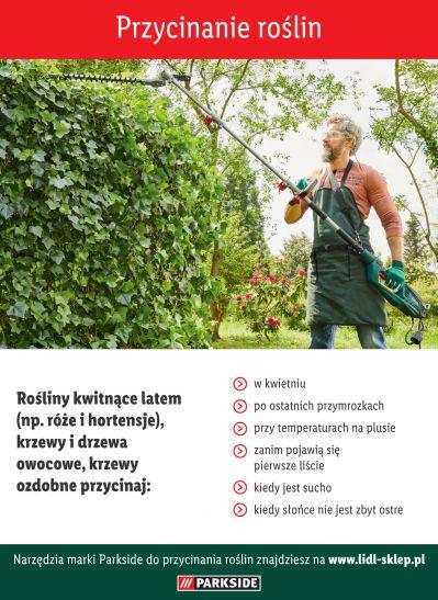 Wskazówki dotyczące przycinania roślin kwitnących latem - infografika