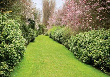 Ciemiernik kwiaty ogrodowe