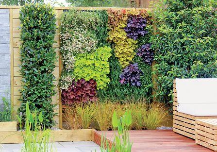 Kolorowa ściana z pięciu odmian żurawek różniących sie kolorem ( Lime Rickey , Creme Brulee , Marmalade ,