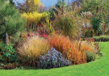 Kolorowe trawy w ogrodzie. Jesień kolorowych traw