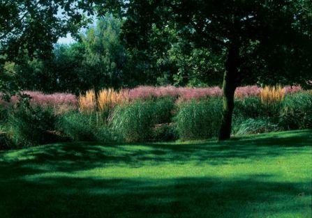 Kolorowe trawy w ogrodzie. Nad rzeczką, pośród traw