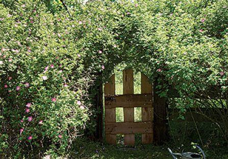 Mała furtka, która prowadzi do pięknego ogrodu.